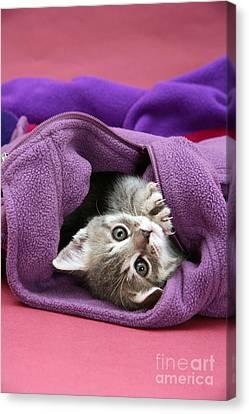 Tabby Kitten Canvas Print by Jane Burton