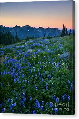 Tatoosh Sunrise Canvas Print by Mike  Dawson