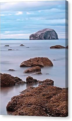 The Bass Rock Canvas Print by Amanda Finan