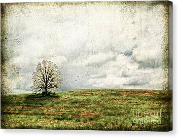 The Lone Tree Canvas Print by Darren Fisher