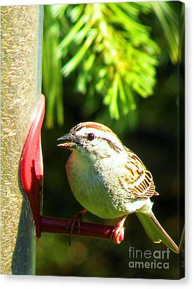 The Sparrow Canvas Print by J Jaiam