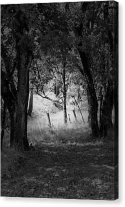 Through The Trees  Canvas Print by Kathleen Grace
