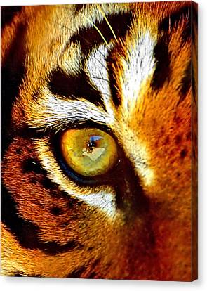 Tigers Eye Canvas Print by Marlo Horne