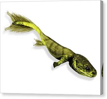 Tiktaalik Prehistoric Fish, Artwork Canvas Print by Victor Habbick Visions