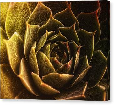 Timeless Canvas Print by Mimulux patricia no No