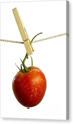 Tomato Canvas Print by Blink Images