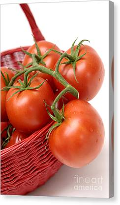 Tomatoes Canvas Print by Bernard Jaubert