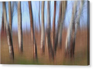 Trembling Aspens Canvas Print by Naman Imagery