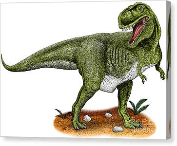 Tyrannosaurus Rex Canvas Print by Roger Hall and Photo Researchers