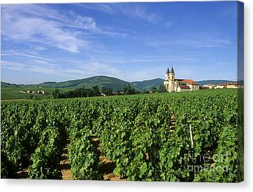 Beaujolais Canvas Print - Vineyard. Regnie-durette. Beaujolais Wine Growing Area. Departement Rhone. Region Rhone-alpes. Franc by Bernard Jaubert
