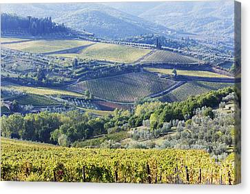 Vineyards And Olive Groves Canvas Print by Jeremy Woodhouse