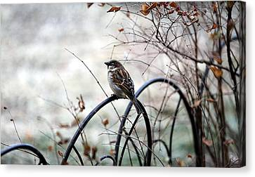 Canvas Print featuring the photograph Watchful Eye by Elizabeth Winter