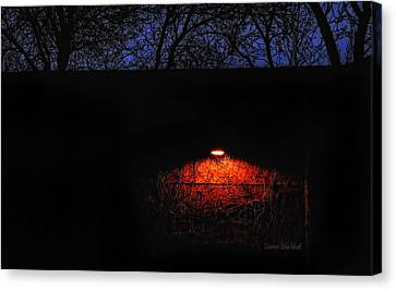 Watching Canvas Print by Donna Blackhall