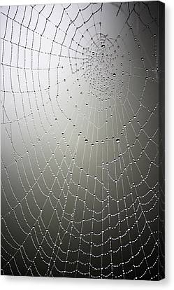 What A Tangled Web.... Canvas Print by Linda Dunn