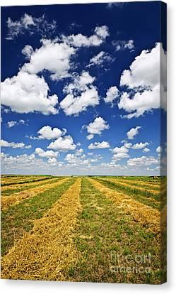 Wheat Farm Field At Harvest In Saskatchewan Canvas Print
