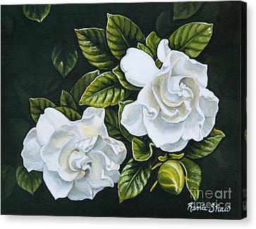 White Gardenia Canvas Print - White Gardenia by Renee Shaw
