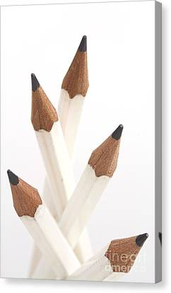 White Pencils Canvas Print by Blink Images