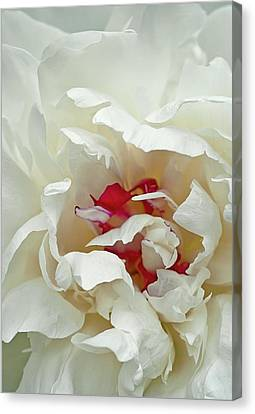 Canvas Print featuring the photograph White Peony by Gordon Ripley