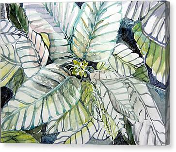 White Poinsettia Canvas Print by Mindy Newman