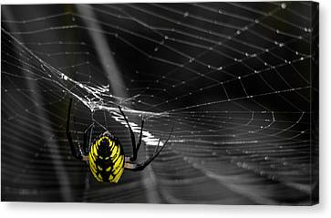 Wicked Web Canvas Print by Brian Stevens