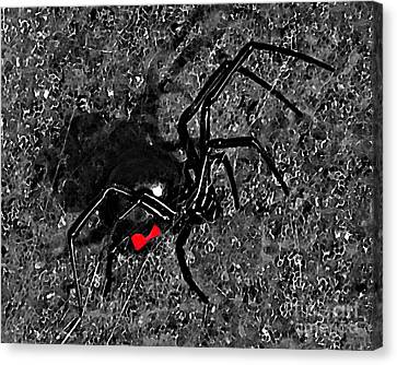 Wicked Widow - Selective Color Canvas Print by Al Powell Photography USA