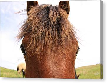 Canvas Print featuring the photograph Wild Mustang by Kate Purdy