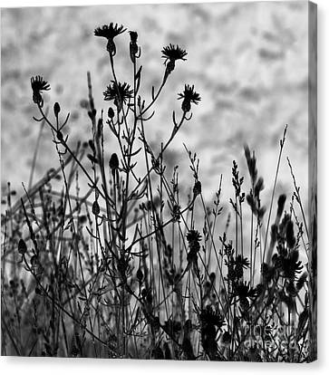 Wildflowers Canvas Print by Blink Images