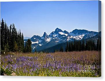 Wildflowers In The Cascades Canvas Print by Ronald Lutz