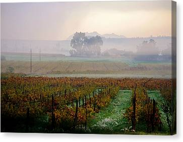 Canvas Print featuring the photograph Wine Field by Werner Lehmann
