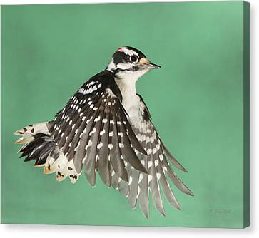 Canvas Print featuring the photograph Wing Flaps Down by Gerry Sibell