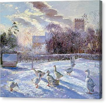Winter Geese In Church Meadow Canvas Print by Timothy Easton