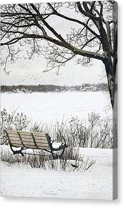Winter Scene With With Bench And Tree Canvas Print by Sandra Cunningham