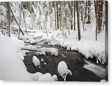 Winter Snow Along Still Creek In Mt Canvas Print by Craig Tuttle
