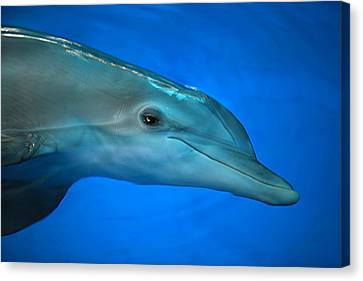 Canvas Print featuring the photograph Winter The Dolphin by Doug McPherson