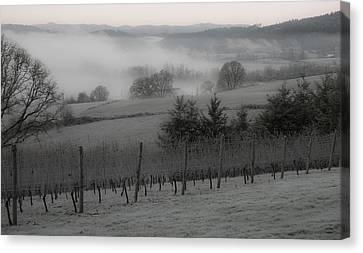 Winter Vineyard Canvas Print by Jean Noren