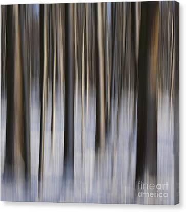 Woodland Fantasy Canvas Print by Heiko Koehrer-Wagner