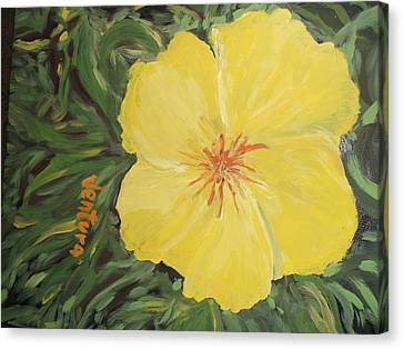 Yellow Alamander Canvas Print