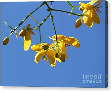 Yellow And Blue Canvas Print by Theresa Willingham