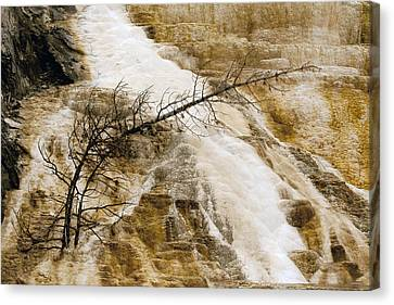 Canvas Print featuring the photograph Yellowstone Color by J L Woody Wooden