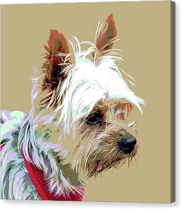 Yorkshire Terrier Canvas Print by Dorrie Pelzer
