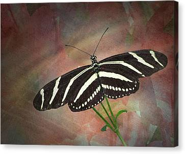 Zebra Longwing  Butterfly-2 Canvas Print by Rudy Umans