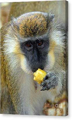 Nature And Wildlife Series Canvas Print by Terry Troupe