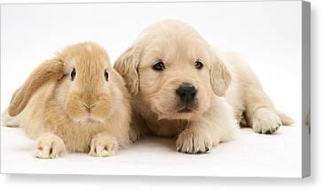 Rabbit And Puppy Canvas Print by Jane Burton