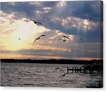 Seagulls In Flight Canvas Print by Valia Bradshaw