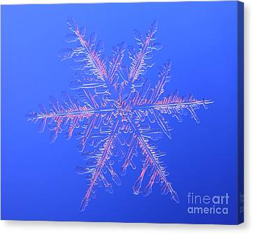 Snowflake Canvas Print by Ted Kinsman