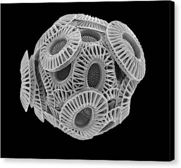 Calcareous Phytoplankton, Sem Canvas Print
