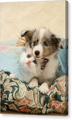 Kitten And Pup Canvas Print