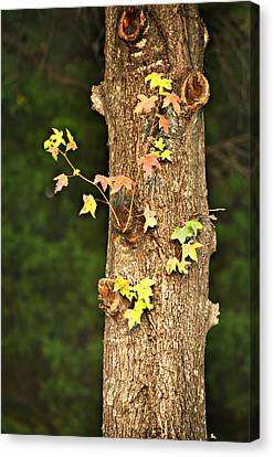 1209-0859 September Tease Canvas Print by Randy Forrester