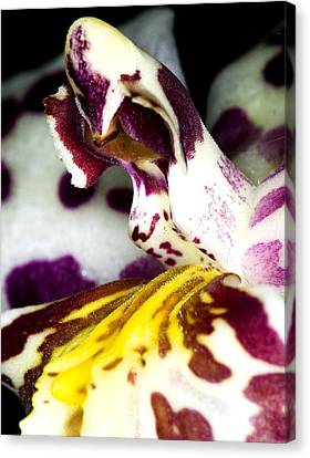 Canvas Print featuring the photograph Exotic Orchid Flower by C Ribet