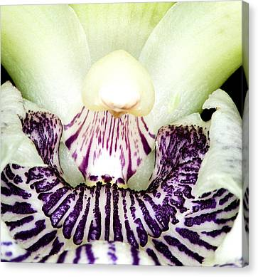 Orchid Flower Bloom Canvas Print by C Ribet